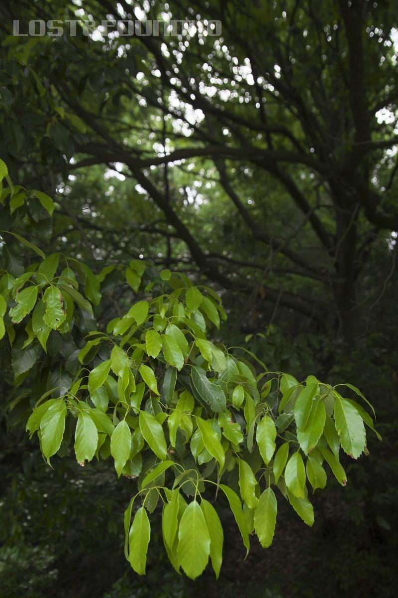 新緑を探して_a0132635_16301793.jpg