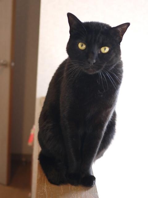 猫のお留守番 やまとくん編。_a0143140_22350185.jpg
