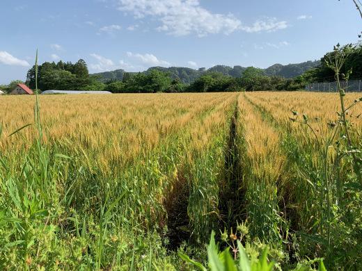 けんちゃん農園_c0133561_21283044.jpeg