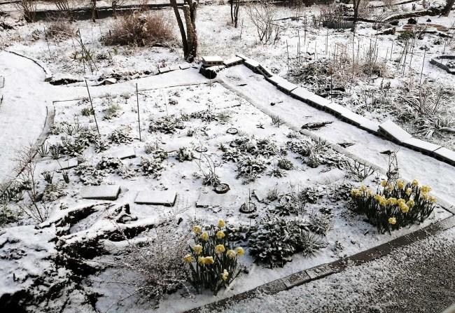 雪・・・_f0153164_18354883.jpg
