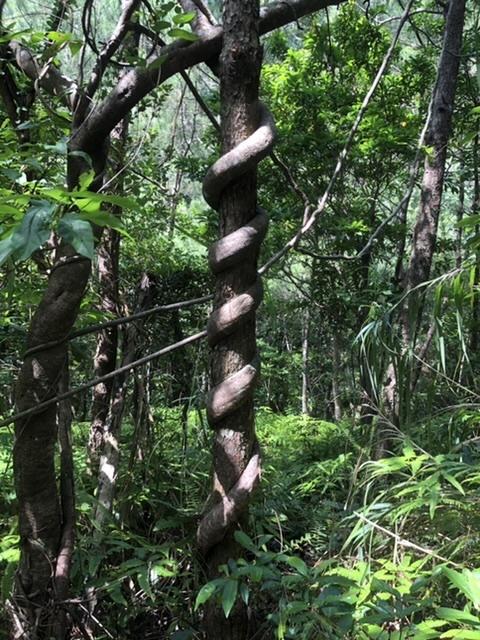 県民の森へ。_a0016090_05483276.jpeg