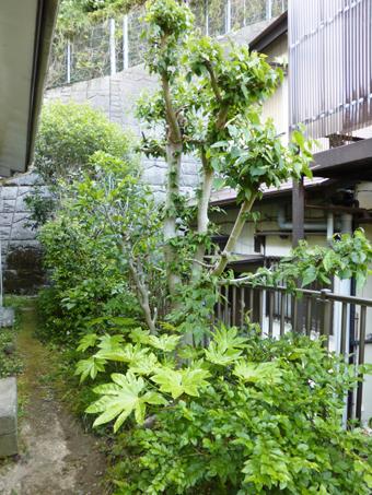 庭の手入れ_c0195909_10082944.jpg