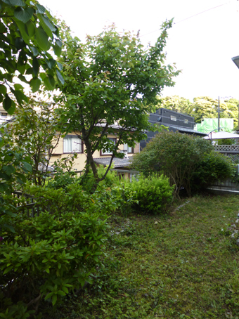 庭の手入れ_c0195909_10083379.jpg