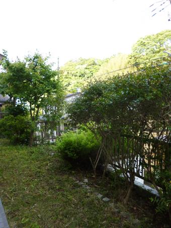 庭の手入れ_c0195909_10083845.jpg