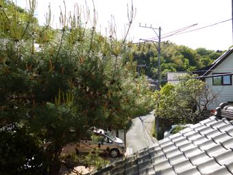 庭の手入れ_c0195909_10084485.jpg