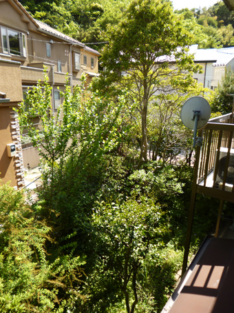 庭の手入れ_c0195909_10090623.jpg