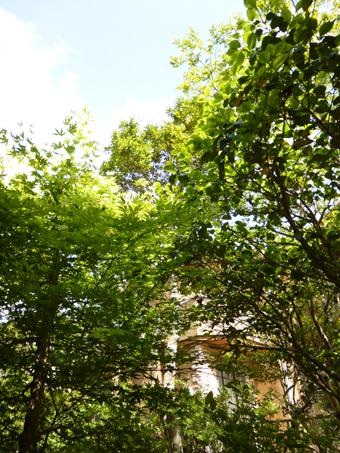 庭の手入れ_c0195909_10092084.jpg
