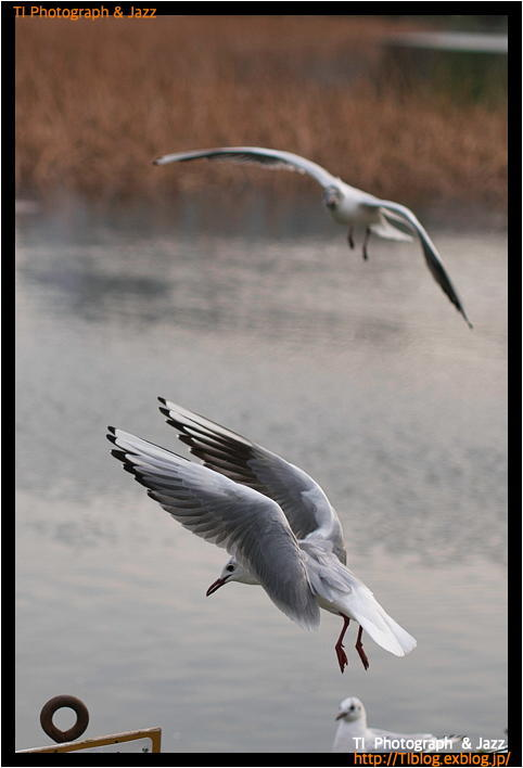 上野の鳥 Part 2_b0134013_18264129.jpg