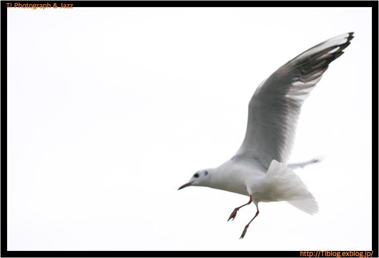 上野の鳥 Part 2_b0134013_18264186.jpg