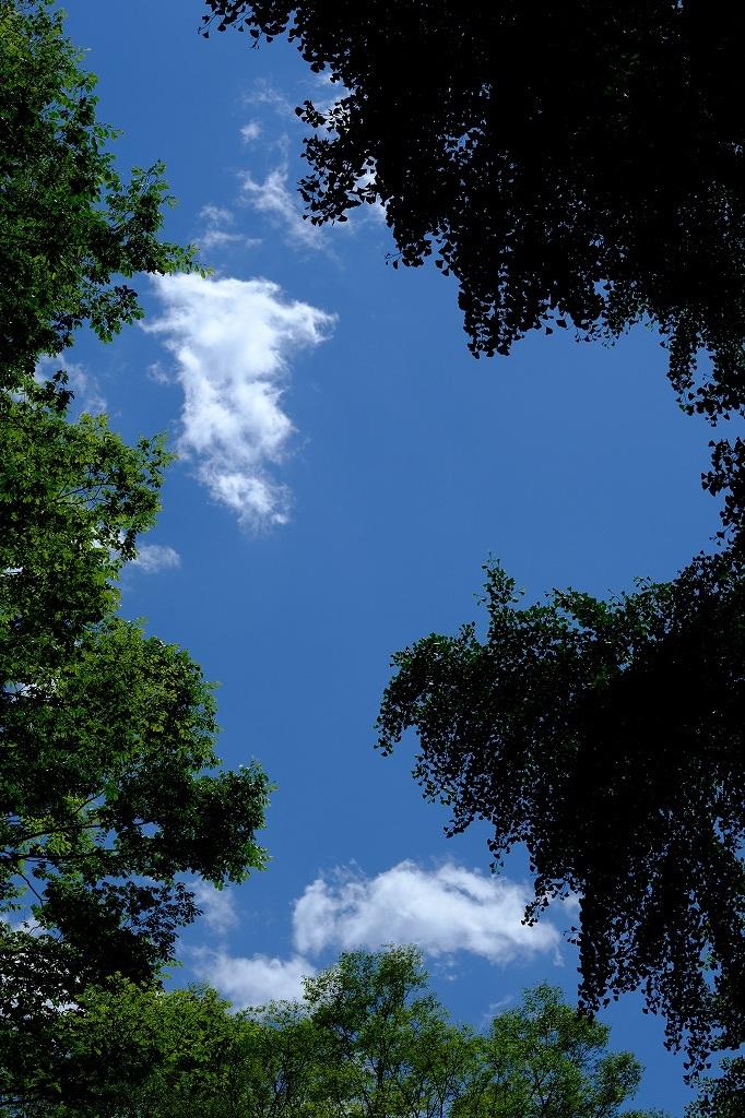 日常の景色 眺めると見る_f0050534_16221010.jpg