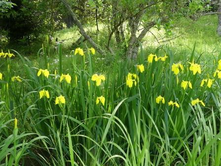 暦の上では、春も終盤_a0123836_17262415.jpg