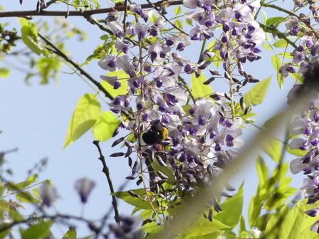 暦の上では、春も終盤_a0123836_17262466.jpg