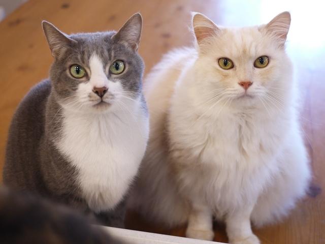 猫のお留守番 天ちゃん麦くん茶くん〇くんAoiちゃん編。_a0143140_22503973.jpg