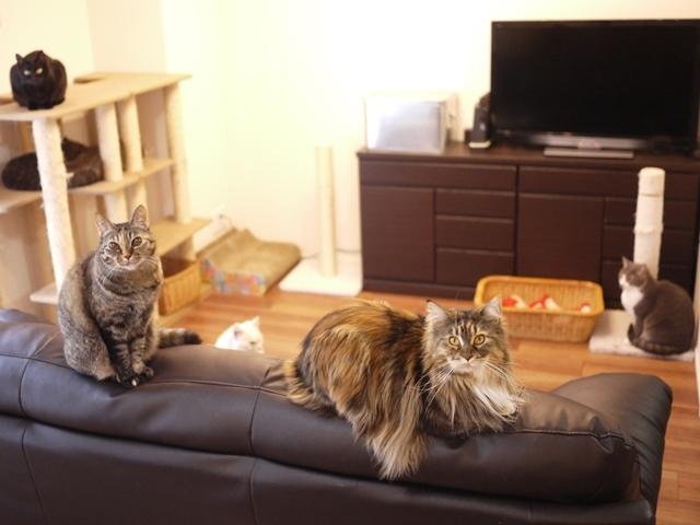 猫のお留守番 天ちゃん麦くん茶くん〇くんAoiちゃん編。_a0143140_22520019.jpg