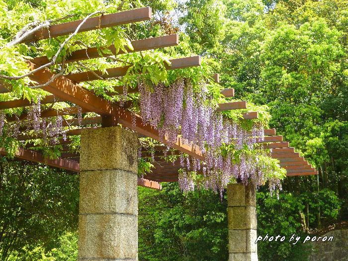 マメ科の樹木と野草_c0137342_19592580.jpg
