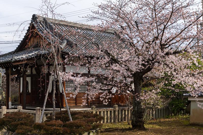 2021桜咲く京都 上品蓮台寺の桜たち_f0155048_19210454.jpg