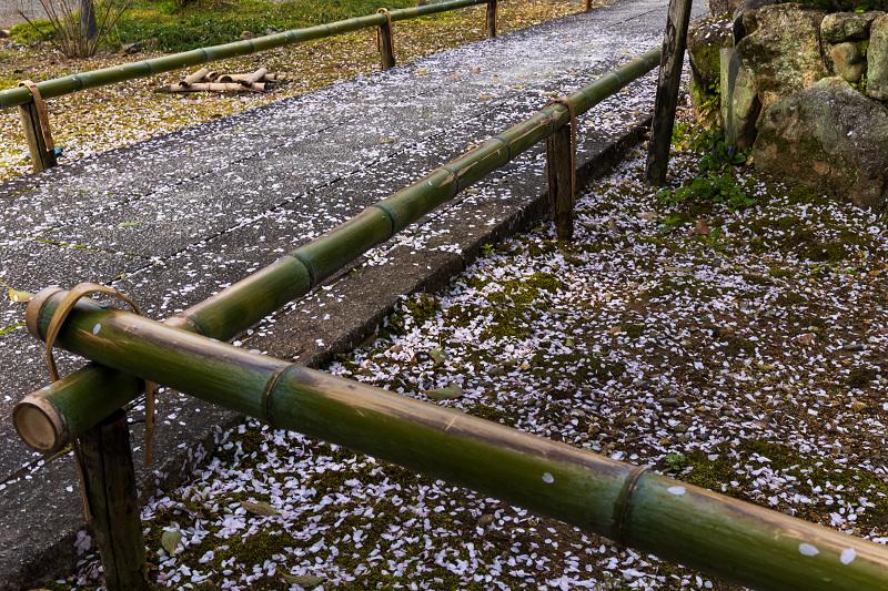 2021桜咲く京都 上品蓮台寺の桜たち_f0155048_19223691.jpg