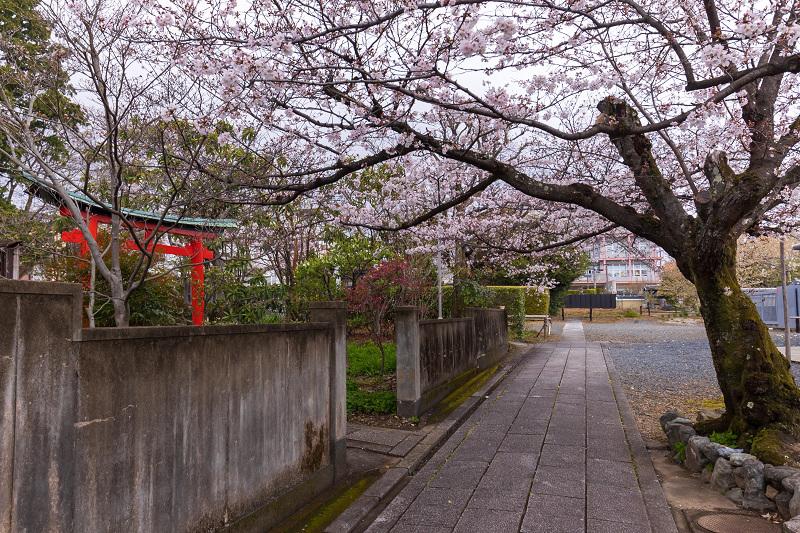 2021桜咲く京都 上品蓮台寺の桜たち_f0155048_19224866.jpg