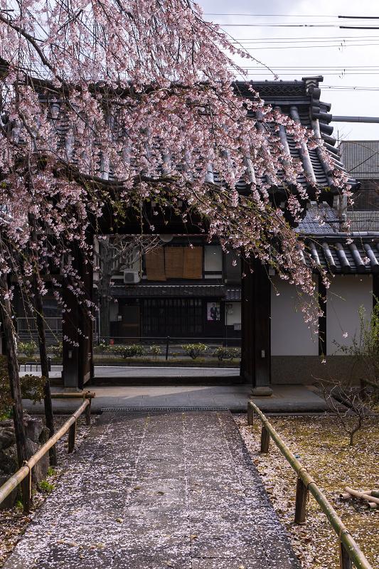 2021桜咲く京都 上品蓮台寺の桜たち_f0155048_19231091.jpg