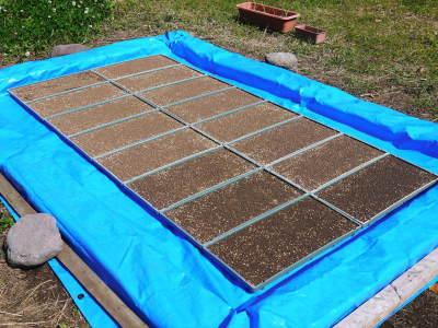 米作りの挑戦(2021年) 苗床をしました!今年も自給自足のために米作り頑張ります!_a0254656_17312579.jpg