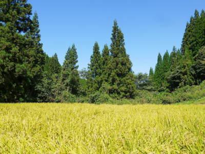 米作りの挑戦(2021年) 苗床をしました!今年も自給自足のために米作り頑張ります!_a0254656_17440902.jpg
