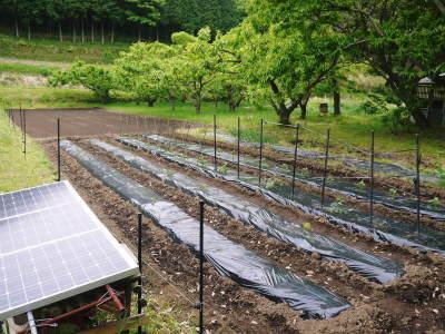 米作りの挑戦(2021年) 苗床をしました!今年も自給自足のために米作り頑張ります!_a0254656_17520756.jpg