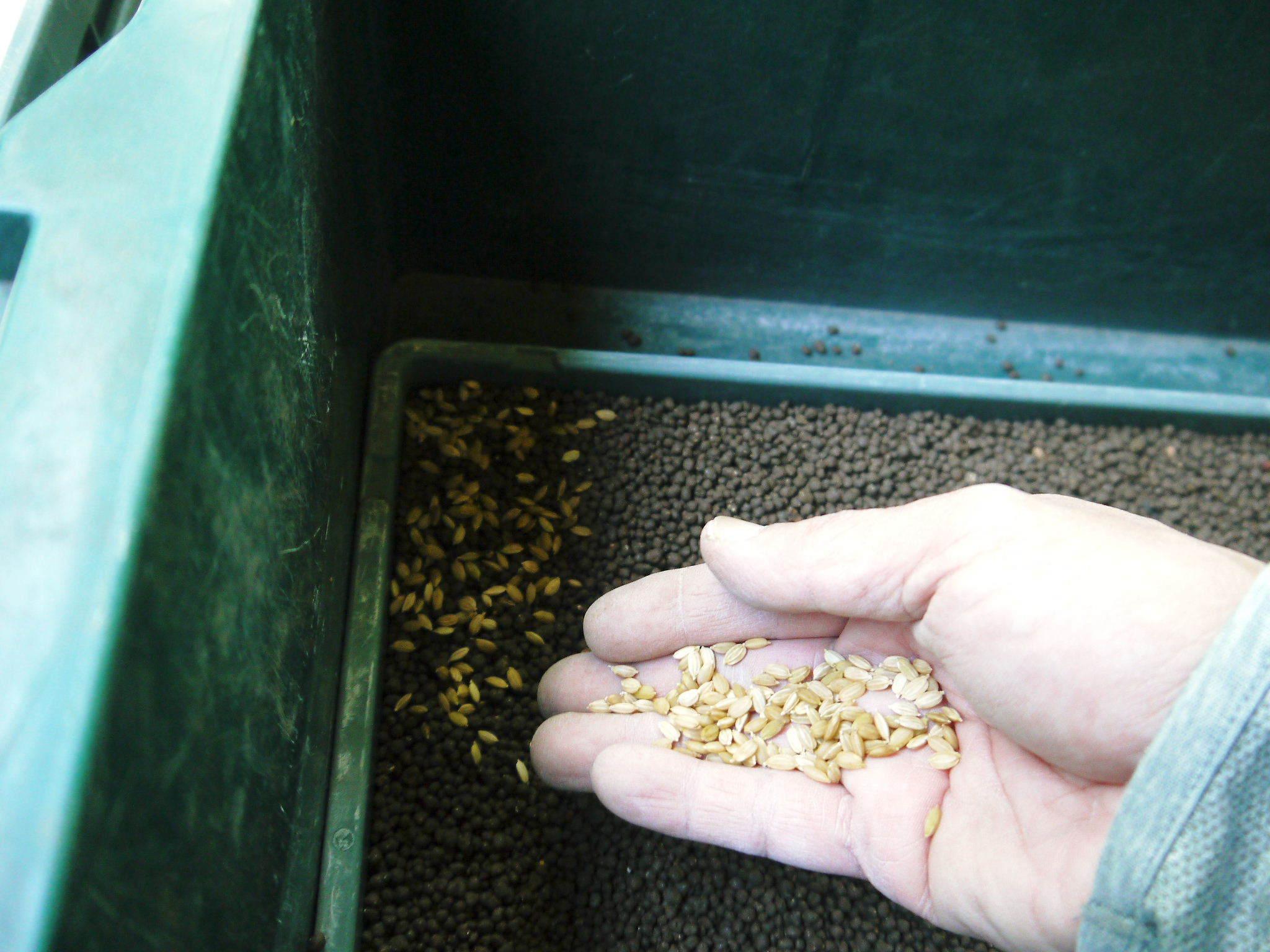 米作りの挑戦(2021年) 苗床をしました!今年も自給自足のために米作り頑張ります!_a0254656_18065232.jpg