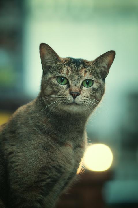 野良猫のポートレイト_e0123176_11272988.jpg