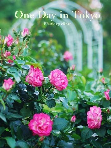 ローズガーデンは花盛り: One Day in Tokyo_f0245680_10503238.jpg