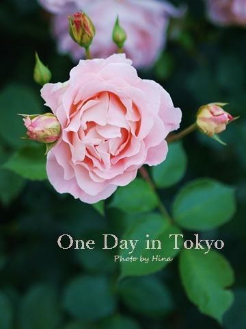 ローズガーデンは花盛り: One Day in Tokyo_f0245680_10510675.jpg
