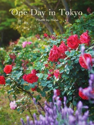 ローズガーデンは花盛り: One Day in Tokyo_f0245680_10512423.jpg