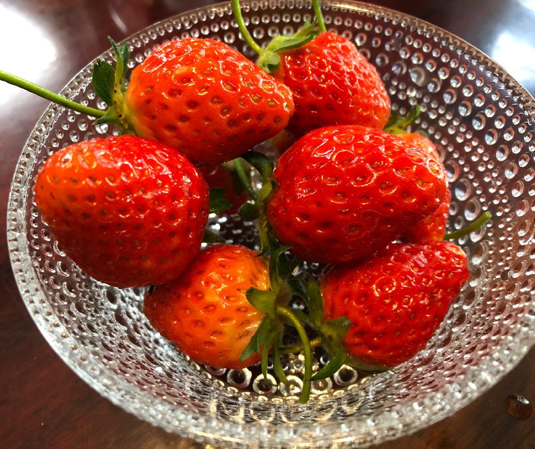 苺収穫_a0129492_08283839.jpeg