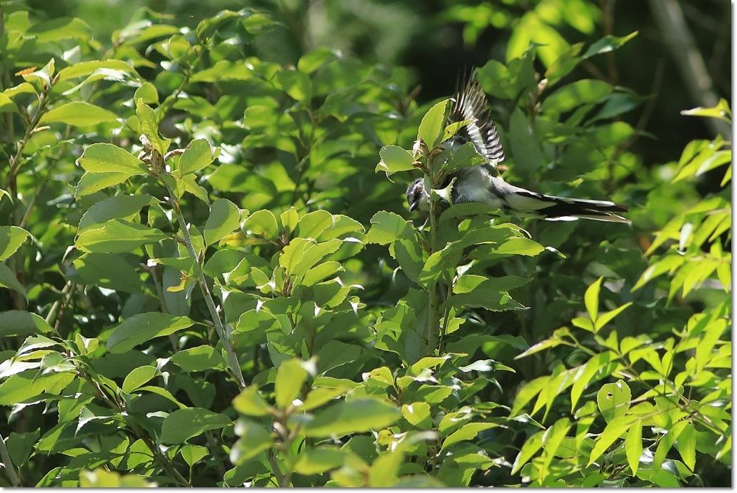 篠山で出会った鳥さんは?_a0057905_13422100.jpg