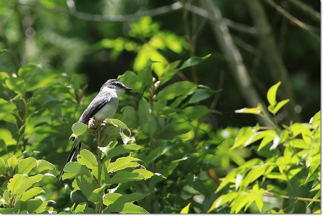 篠山で出会った鳥さんは?_a0057905_13422687.jpg