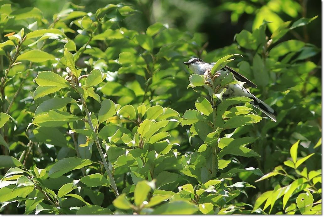 篠山で出会った鳥さんは?_a0057905_13431460.jpg