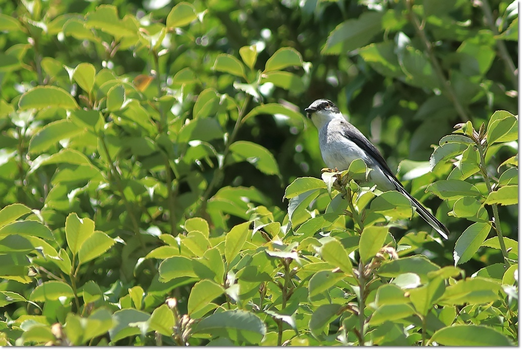 篠山で出会った鳥さんは?_a0057905_13432068.jpg