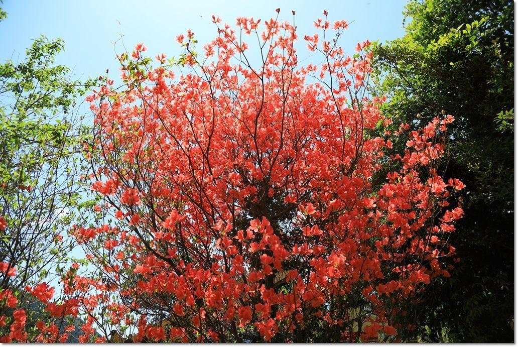 篠山で出会った鳥さんは?_a0057905_13433668.jpg