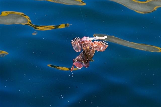 J:COM釣りたいっ!2021年5月号 ファミリーにお勧め・東京湾・カサゴ絶好調 ルアーでも(*\'▽\')_c0196414_03231872.jpg