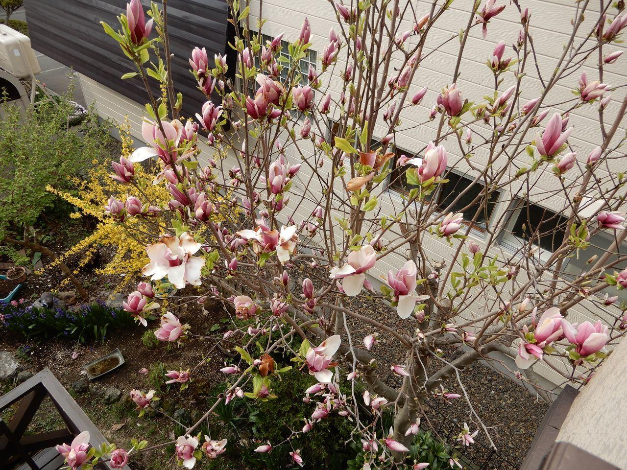 本格的な春を味わう前に強風下の立夏がやってきた_c0025115_21305958.jpg