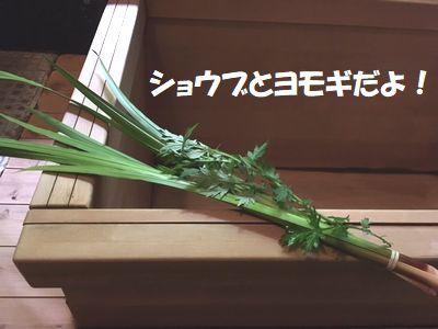 かっぱも菖蒲湯に入るのだ!_e0234016_17360869.jpg