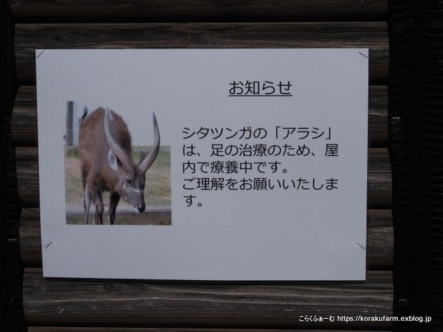 王子のシタツンガ アラシくんの近況(2021/2-4)  _c0188824_16083951.jpg