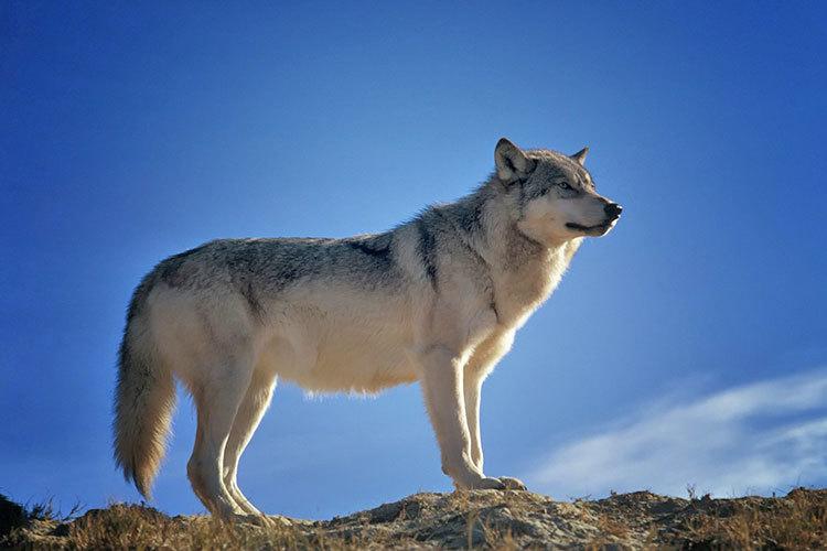 動物の生態系_e0257524_12344201.jpg