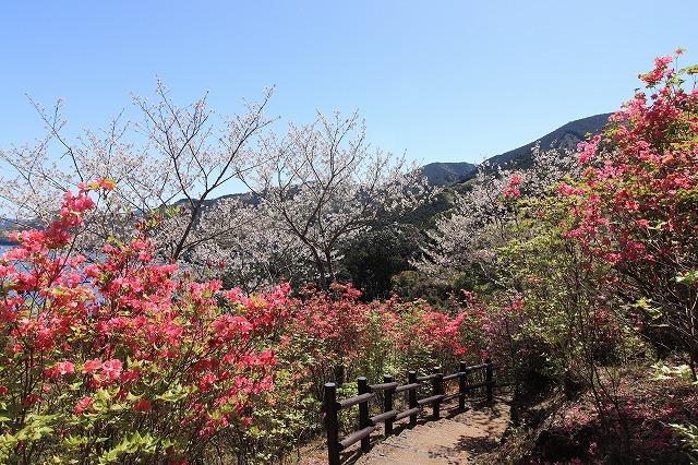 城山公園散策(その2)(撮影:4月7日)_e0321325_14252434.jpg