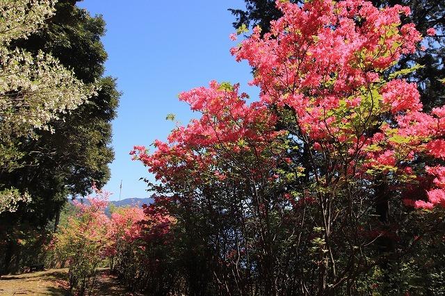 城山公園散策(その2)(撮影:4月7日)_e0321325_14280339.jpg