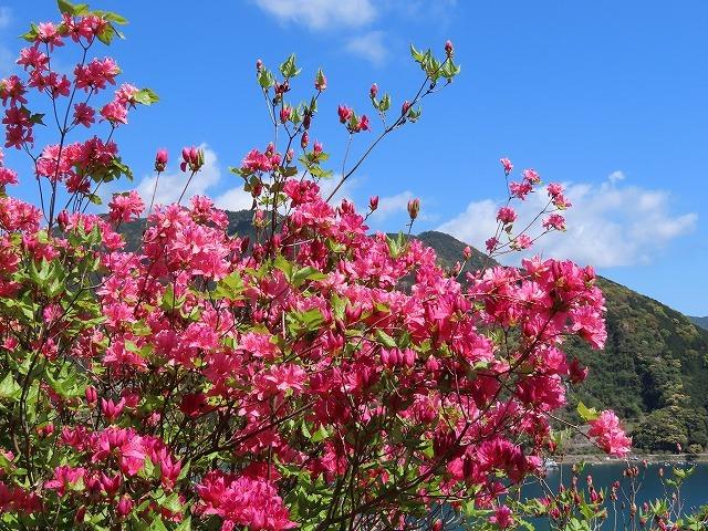 城山公園散策(その2)(撮影:4月7日)_e0321325_14310141.jpg