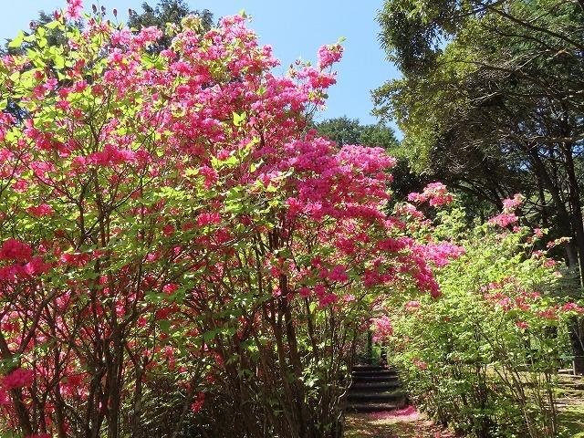 城山公園散策(その2)(撮影:4月7日)_e0321325_14315104.jpg