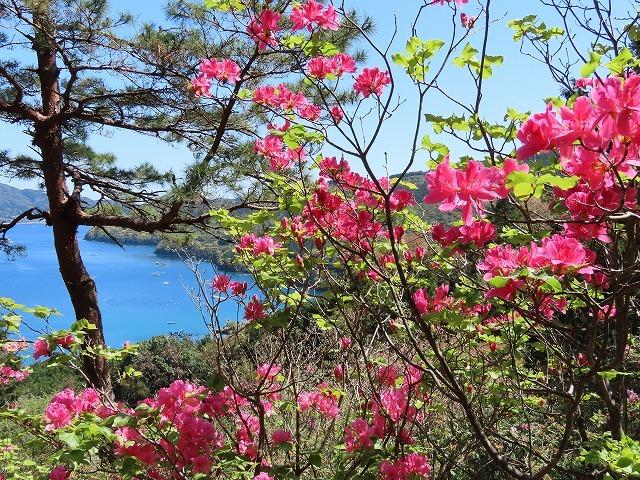 城山公園散策(その2)(撮影:4月7日)_e0321325_14352006.jpg