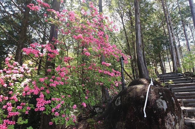 城山公園散策(その2)(撮影:4月7日)_e0321325_14354974.jpg