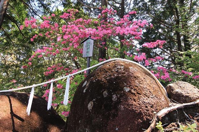城山公園散策(その2)(撮影:4月7日)_e0321325_14360216.jpg