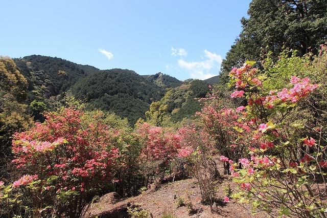 城山公園散策(その2)(撮影:4月7日)_e0321325_14383576.jpg